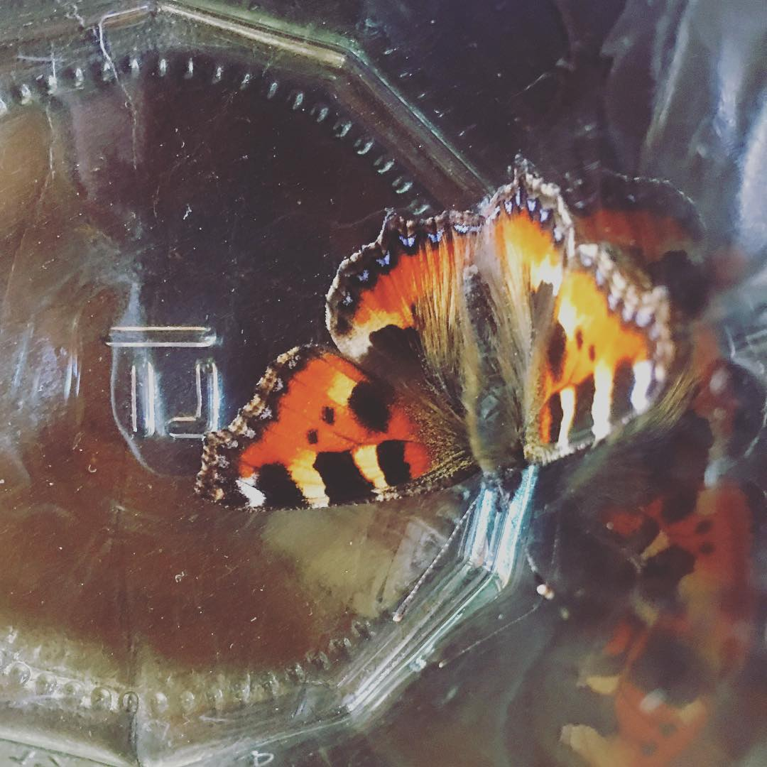 Little helper in the studio today #butterfly #lifeinthecountry #wildlife