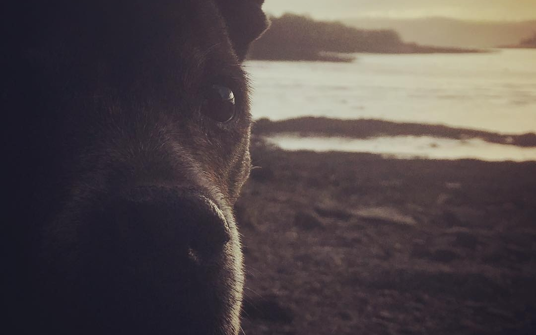 Some lovely sunshine on our river walk… #sunlight #dogwalks #inspiration