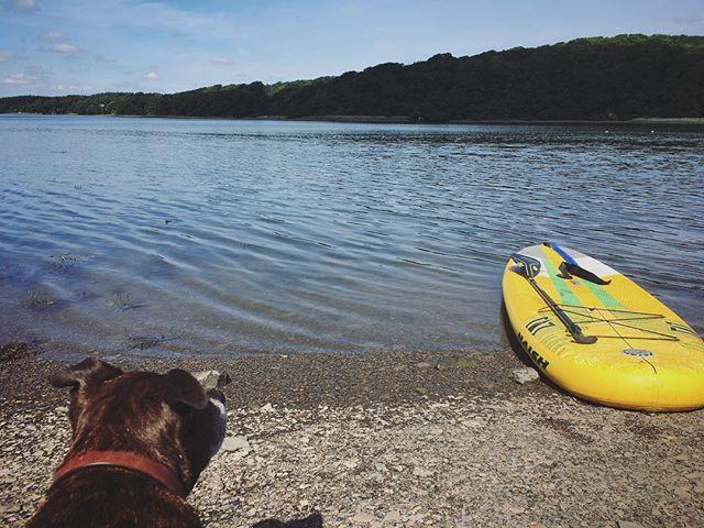 Sunday paddle #adventure #supadventure #riverexploring #supdog