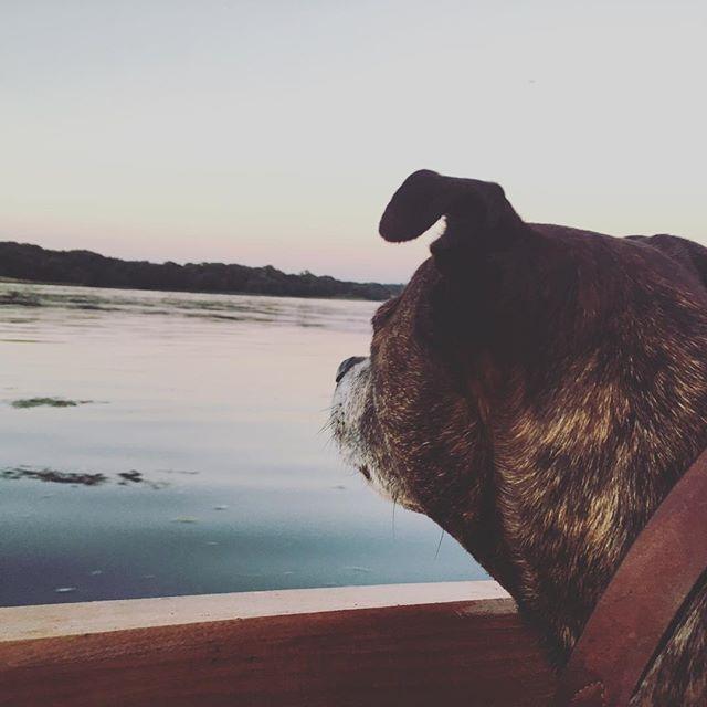 Sunset boat trips… #boatdog #boatdogsofinstagram #boatadventures