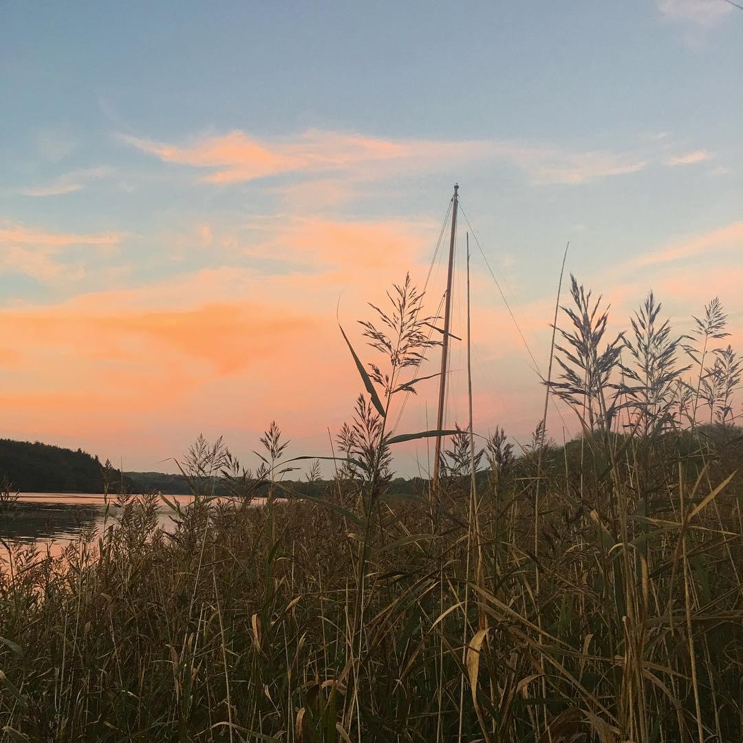 Little wooden mast hiding in the reeds #svtamarisk #woodenboat #wintersunshine #mudberth #classicboat