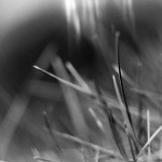 Black and White Macro Grass Gale Lewis