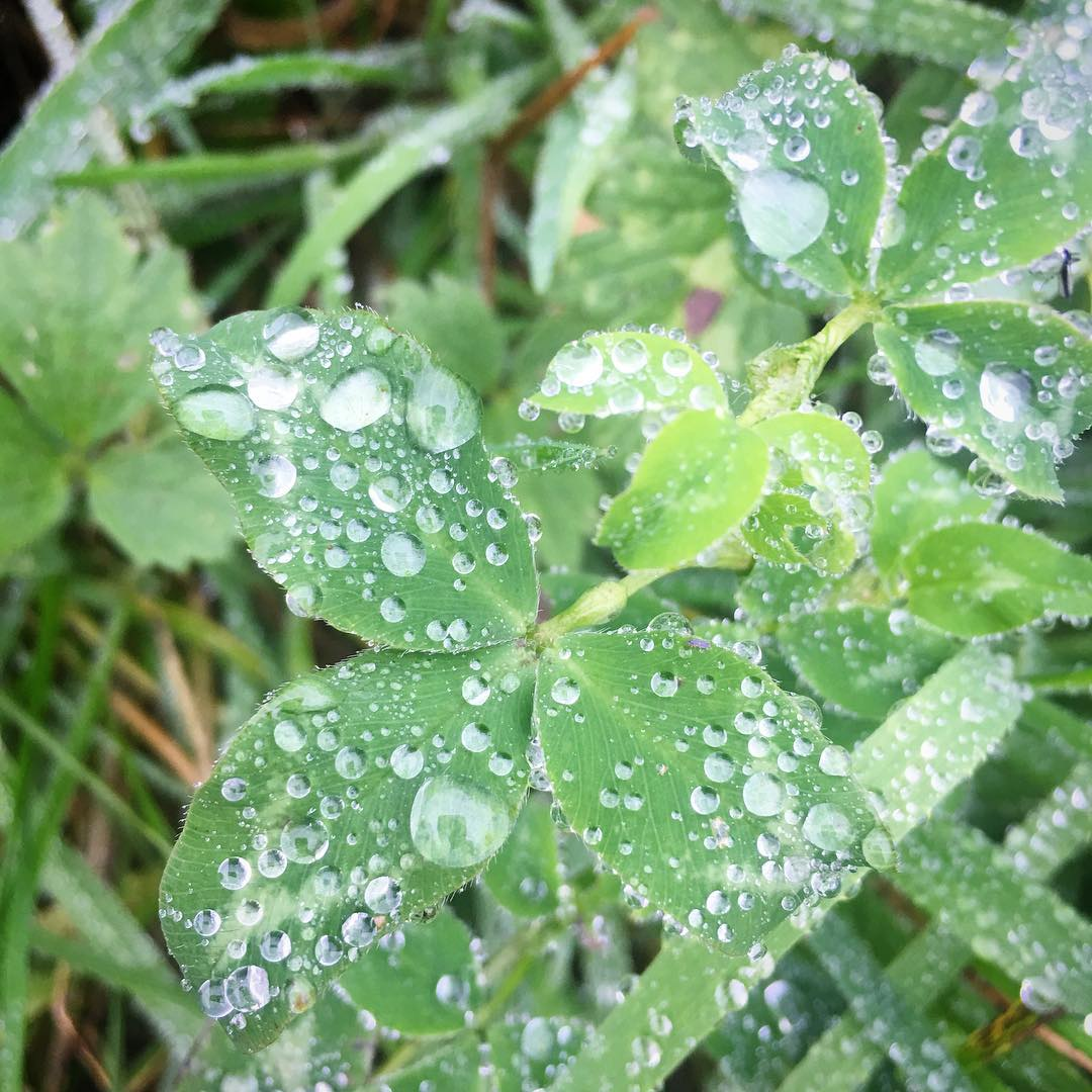 A little bit of sparkle on a rainy day… Raindrops on our new walk route #inspiration #autumnwalks #thegreatoutdoors