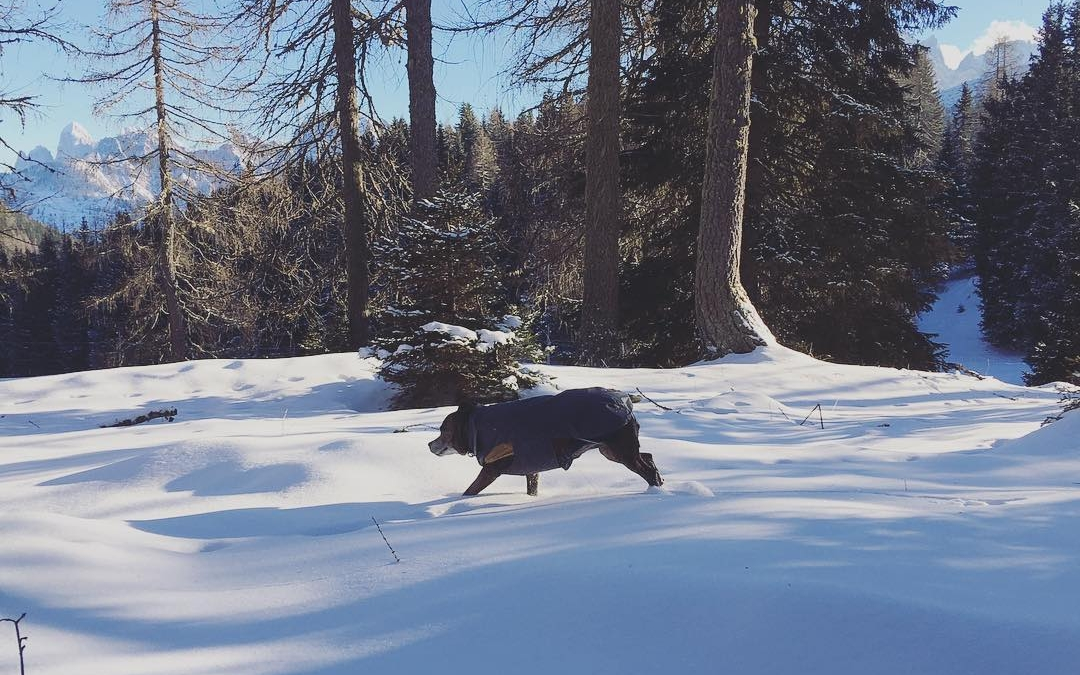Winter adventures in the woods #dolomites #italy #travelwithdogs #dogsofinstagram #dogadventures #winteradventures