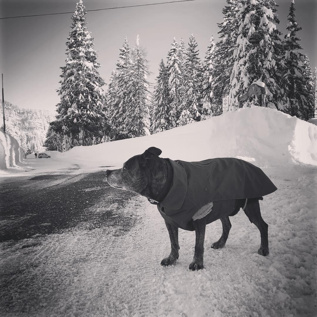 Winter walks in snowy mountains . . .  #dolomites #dogsofinstagram #dogadventure #adventuredog #winteradventures #mountainadventures