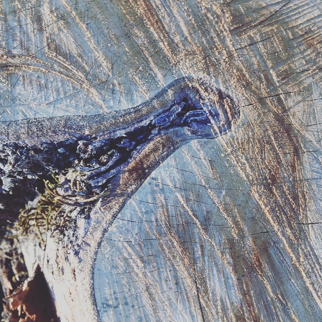 Wood patterns … #dolomites #dolomiti #naturaltexture #woodtexture